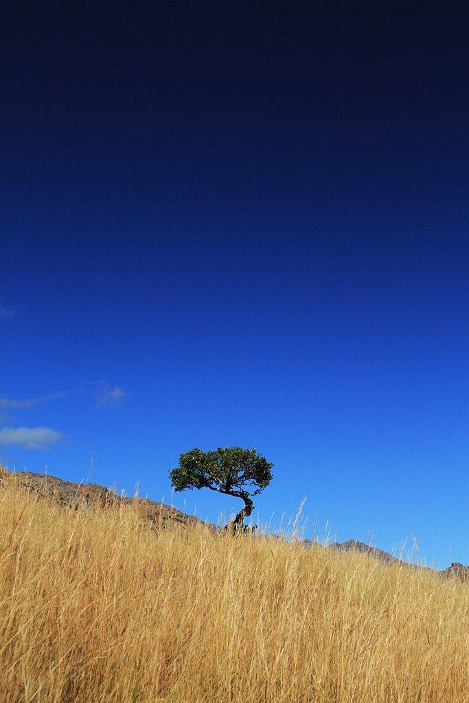 Madagascar-42.jpg